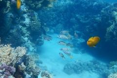 Ägypten Rotes Meer
