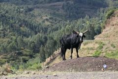 Äthiopien Weg nach Dessie