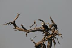 Botswana Khwai