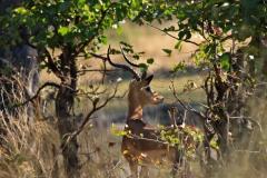 Botswana Moremi NP