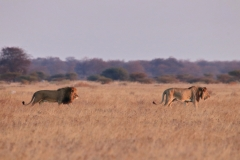 Botswana Nxai Pans