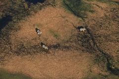 Botswana Okawango Flug
