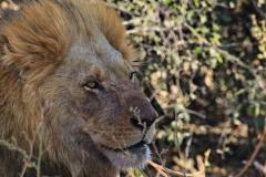 Botswana Chobe NP Savuti