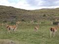 chile_patagonien_027