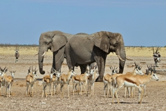 November 2020: Elefanten am Wasserloch im Etosha Nationalpark / Namibia