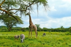 Januar 2020: Sanctuary Farm in Kenia