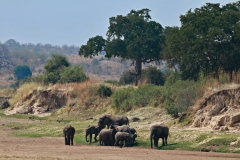 August 2020: Auf Safari im Ruaha Nationalpark in Tansania