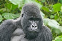 Kongo - Virunga NP März 2020
