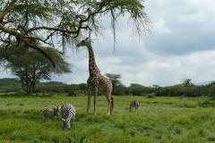 Kenia Naivasha