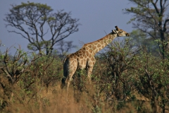 Namibia Mudumu