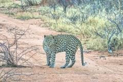Namibia Okunjima