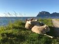 Norway_110