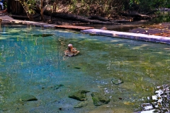 Sambia Kapishya Hot Springs
