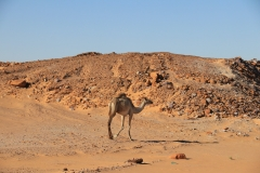 Sudan Norden