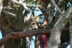Südafrika Kruger Nationalpark