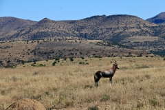 Südafrika Mountain Zebra NP