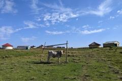 Südafrika Lubanzi