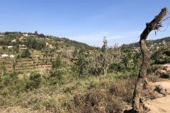Mambo Usambara Mountains
