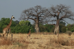 Tansania Ruaha Nationalpark