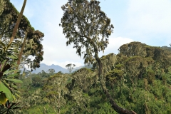 Uganda Rwenzori