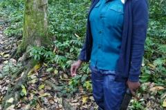 Uganda Kalinzu Forest Schimpansen